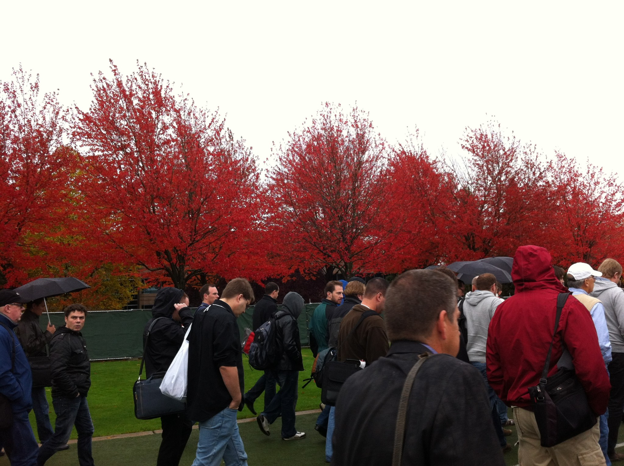 Redmond Red Trees